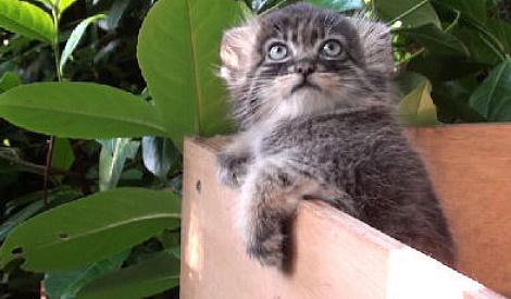 И зачем меня в этот ящик засунули?