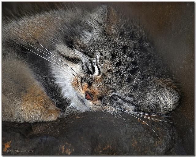 Хорошо мне спится, когда сметана снится!