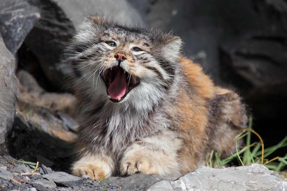 Ну не зевайте же, а то и мне хочется!