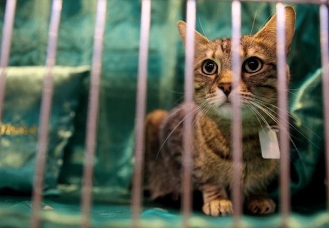 Омский суд присудил выплатить 11,1 тыс рублей за гибель кота