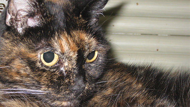 26-летняя кошка Тиффани стала рекордсменом Гиннеса