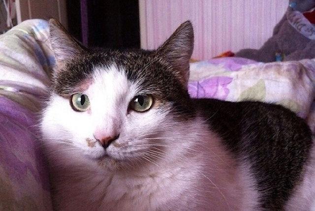 3-лапую кошку из Татарстана приютили в Германии