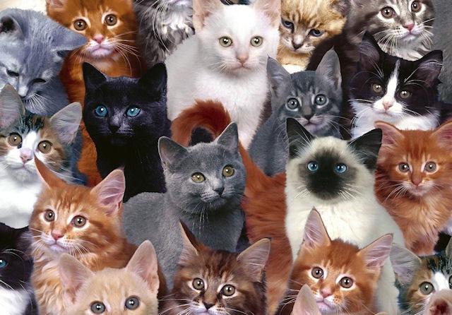 Пенсионерке придется расстаться с 34 кошками по решению суда