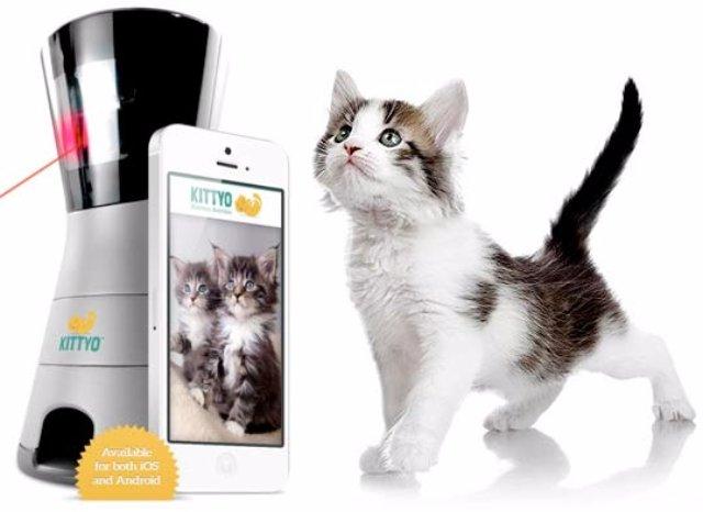 Американцы создали устройство, которое не даст кошке заскучать