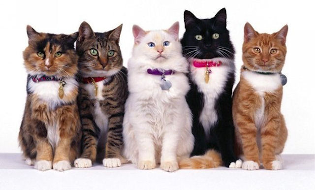 Американец создал домашний Диснейленд для котов