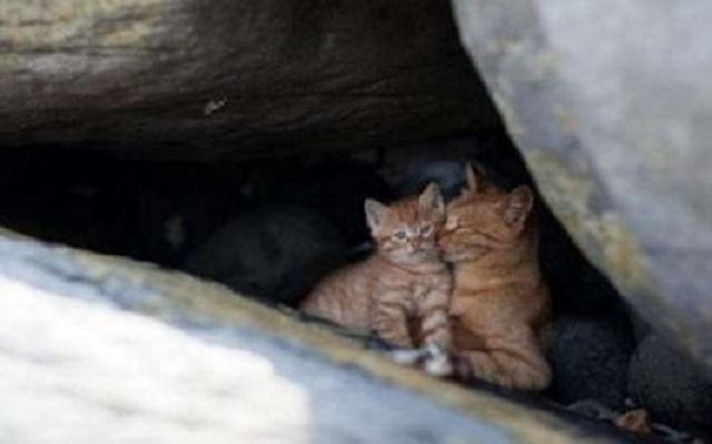 Американский остров заселили бездомные кошки
