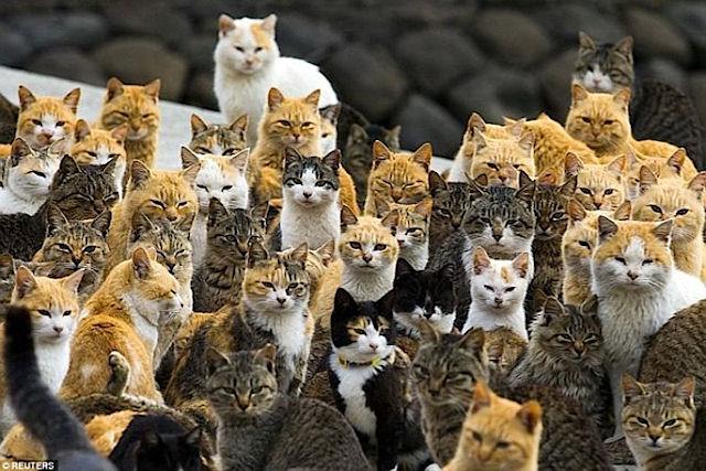 Аошима – рай для кошек