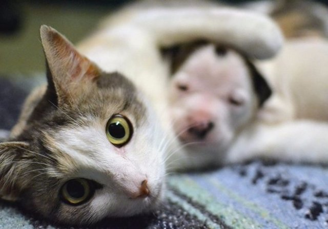Бездомной кошке удалось заработать 25 тысяч долларов