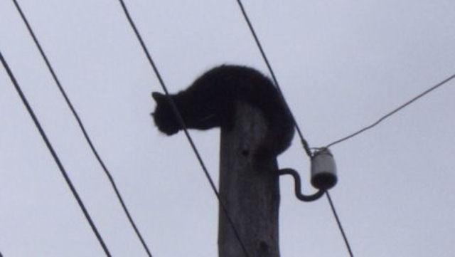 Бездомный кот «вырубил» электроэнергию в 2-х населённых пунктах на Кубани