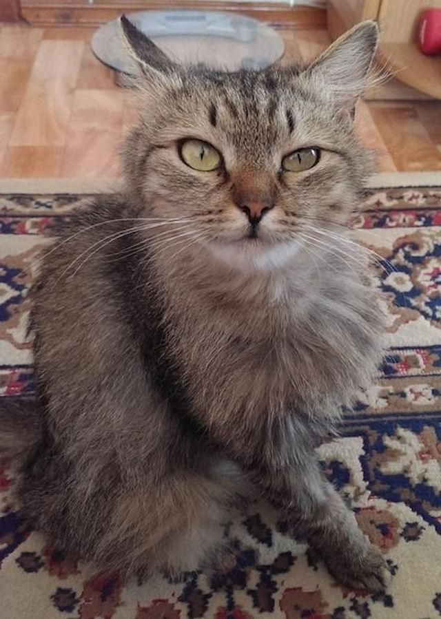 Благодарная кошка спасла жизнь хозяйке