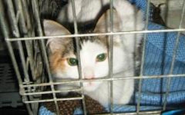 Благодаря китайским полицейским 500 кошек избежали попадания в кастрюлю