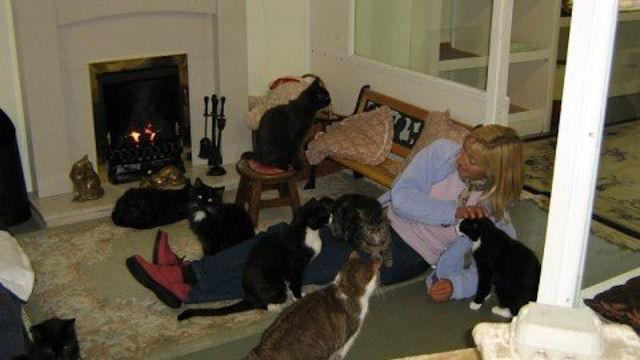 Британцы открыли кошачий дом престарелых