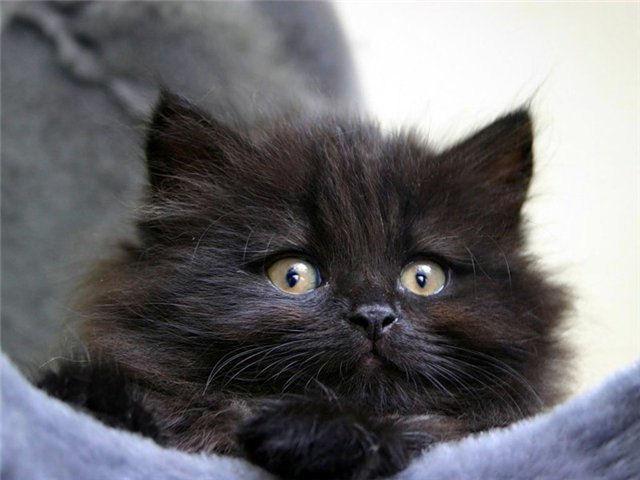 Британские пожарные спасли кота-высотника