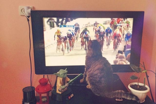 Челябинский кот увлекается спортом