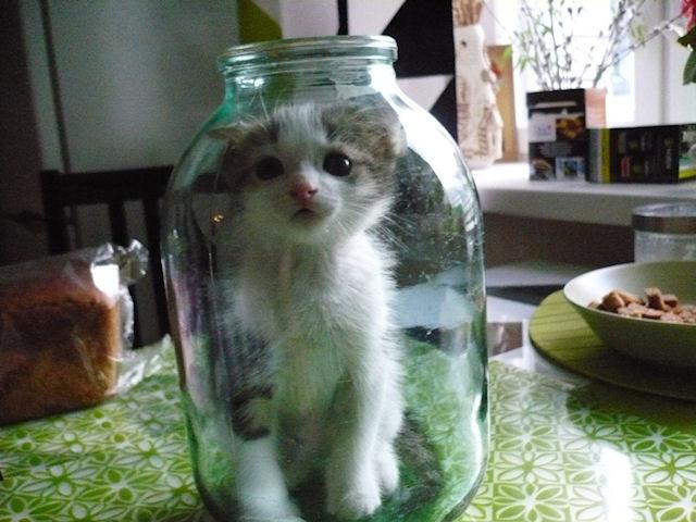 Чем развлечь домашнюю кошку?