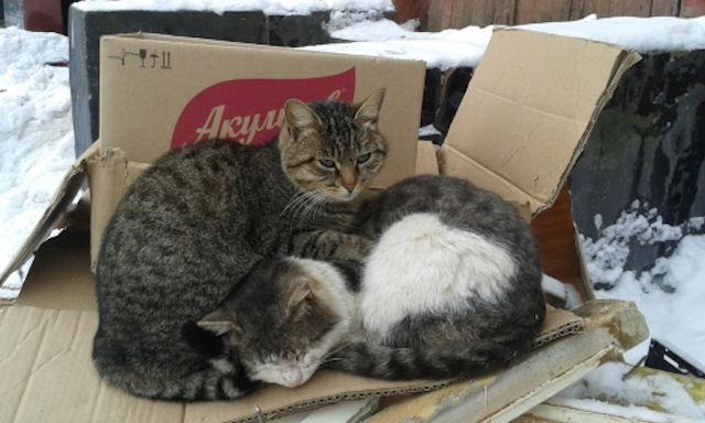 Что мы знаем о кошачьей верности?