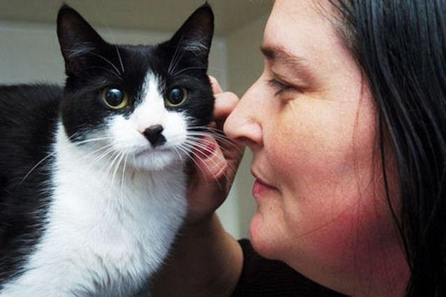 Чудеса случаются — это доказала кошка, выжившая после 50-ти огнестрельных ранений