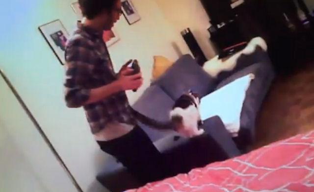 Американские студенты воплотили в реальность дистанционное управление кошками