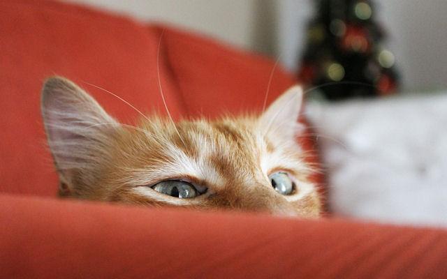 «Диванный» кот вернулся домой спустя 10 дней