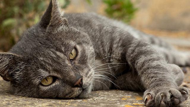 ДНК кошки использовано как доказательство в деле об убийстве