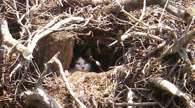 Добродушные британцы спасли родившихся на дереве котят