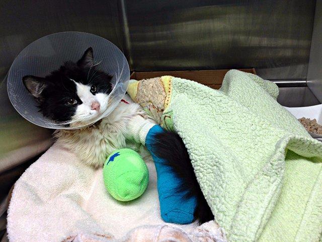 Добродушные люди спасли жизнь умирающему котёнку