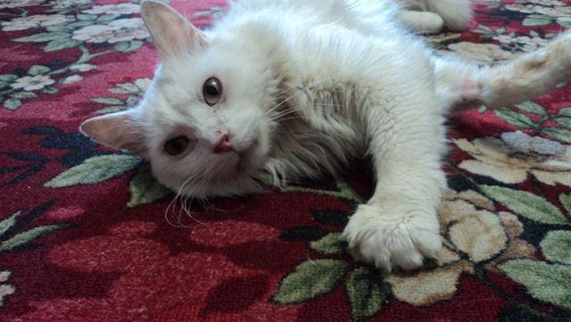 Дочь получила в наследство от матери 15 кошек