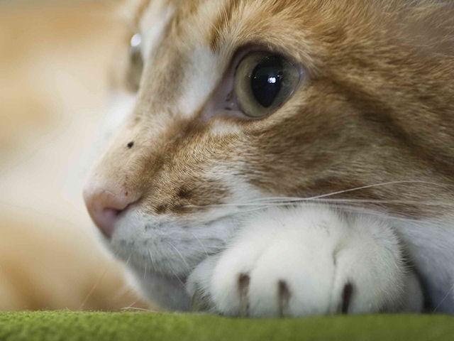 Домашние кошки: неуправляемые, но ленивые