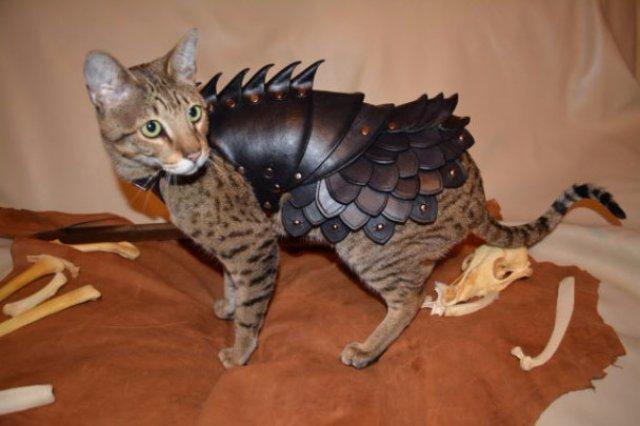 Доспехи помогут защитить кошек
