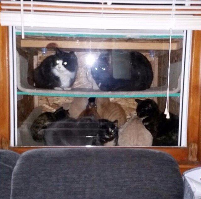 Фермер соорудил «котвариум» для спасения котов от холода