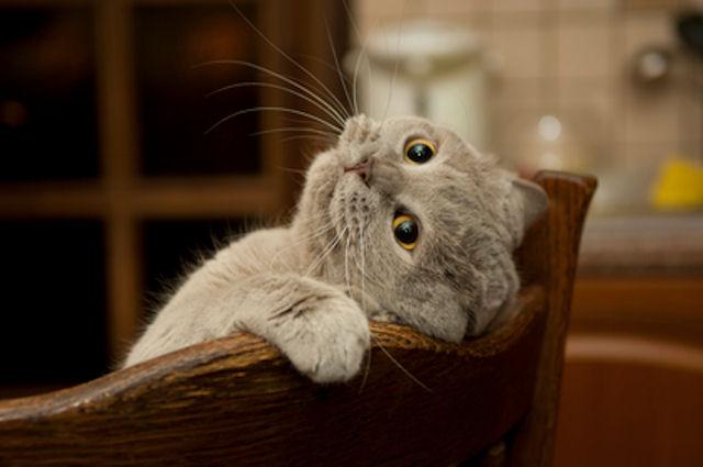 Генетика доказала уникальность домашних кошек