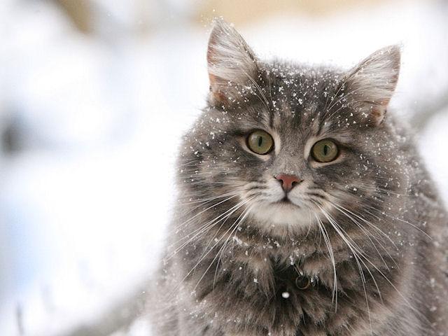 Гены помогут кошкам выжить в любой среде