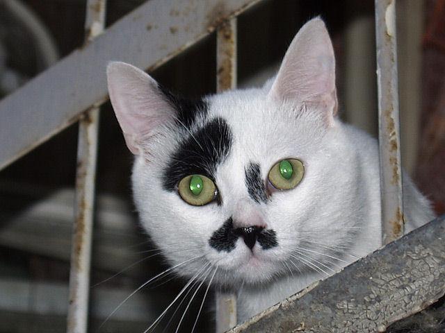 Из-за сходства с Гитлером кот стал одноглазым