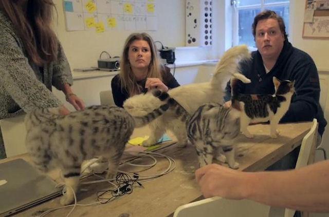 Голландская компания выпускает эксклюзивные вещи для кошек
