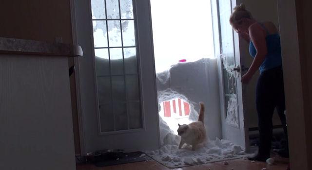 Голодный кот пробил снежную стену