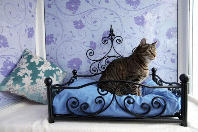 В Париже открыта первая гостиница для кошек