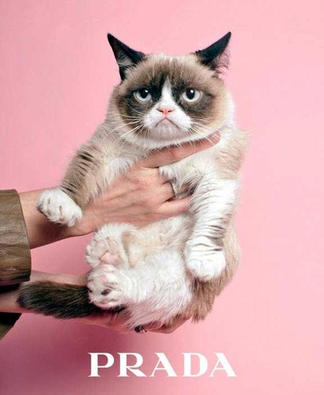 Grumpy Cat прорекламирует кошачий корм