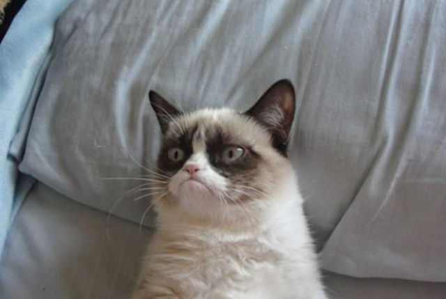 Grumpy Cat получил награду «Мем года»