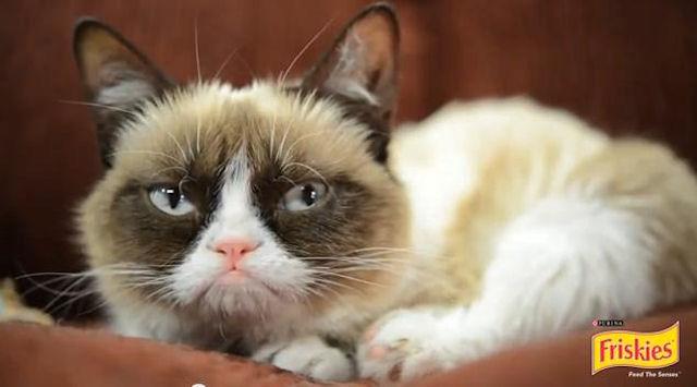 Популярная в интернете Grumpy Cat снялась в рекламе