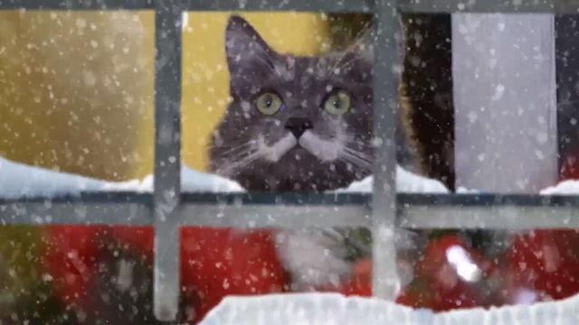 Знаменитые кошки интернета снялись в видеоклипе «Hard to Be a Cat at Christmas»