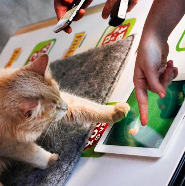 В США пройдет конкурс по созданию лучшей игры для кошек
