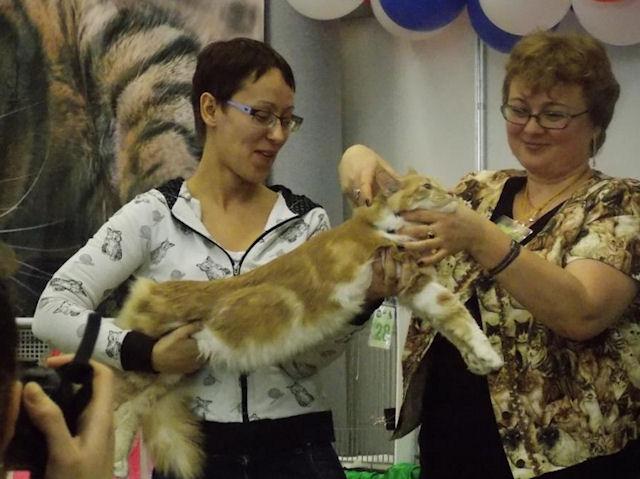 В Иркутске прошла выставка кошек российских парод