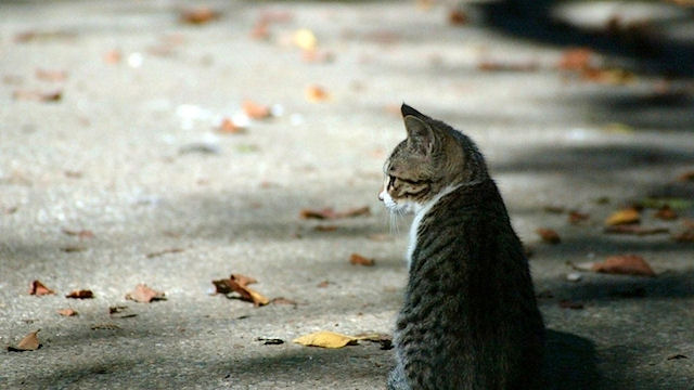 Итальянский кот навещает умершего хозяина