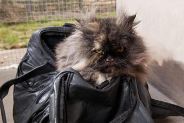 Кошка тайком улетела из Египта в Англию