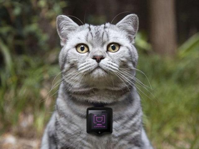 Изобретена личная камера для котов, позволяющая размещать фото в Instagram