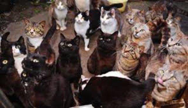 Израильтянин развёлся с женой из-за кошек
