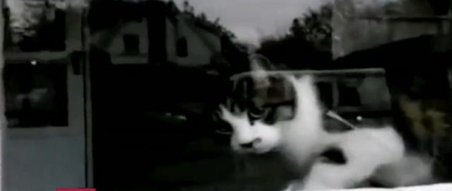 К грозному коту лучше не подходить