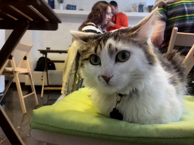 В Самаре существует кафе для бездомных кошек