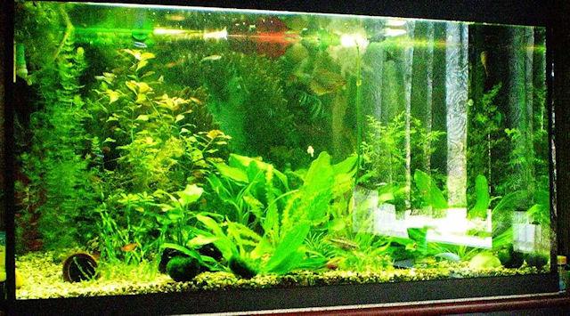 Как подобрать аквариум