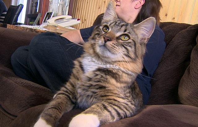 Канадские медики превратили кошку-гермафродита в кота